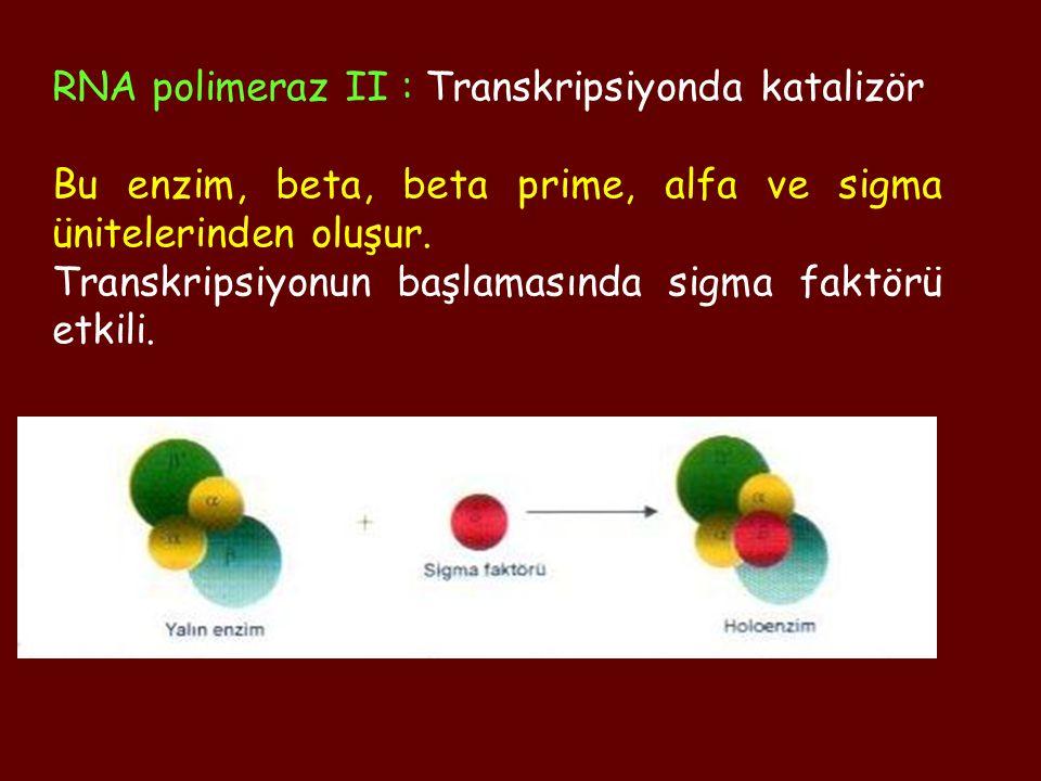 RNA polimeraz II : Transkripsiyonda katalizör