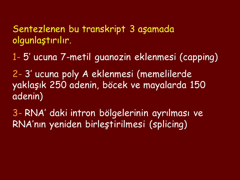 Sentezlenen bu transkript 3 aşamada olgunlaştırılır.