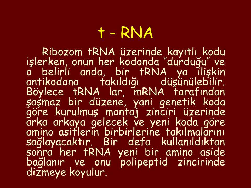 t - RNA
