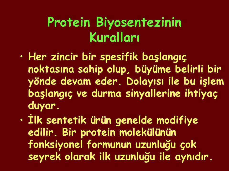 Protein Biyosentezinin Kuralları