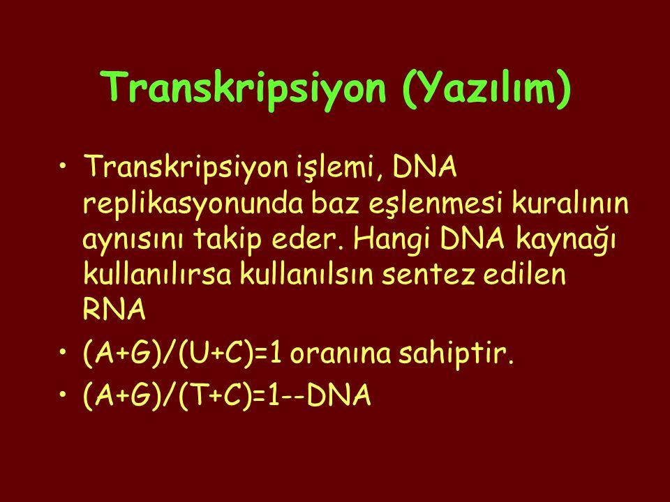 Transkripsiyon (Yazılım)