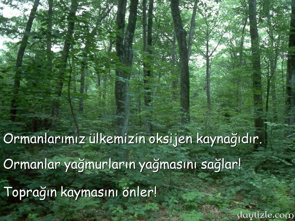 Ormanlarımız ülkemizin oksijen kaynağıdır.