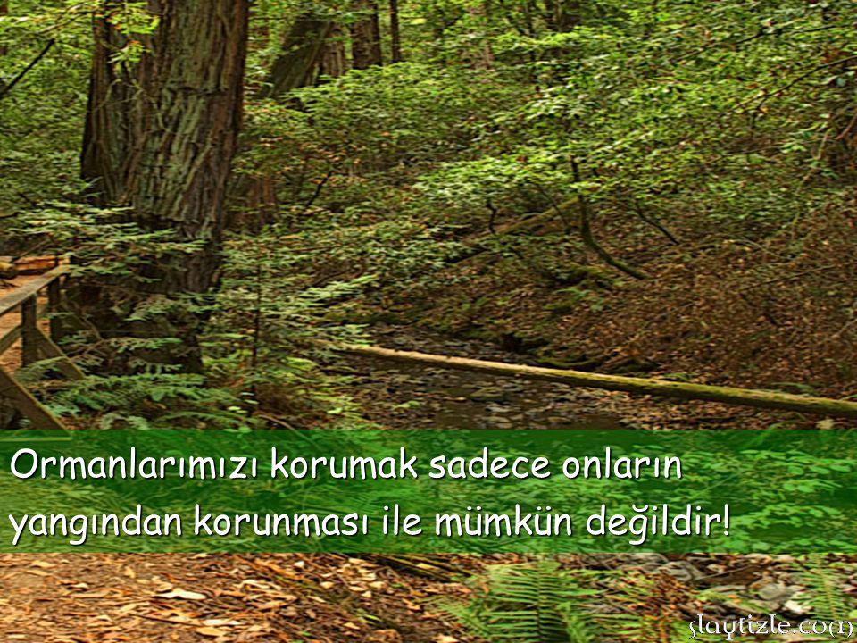 Ormanlarımızı korumak sadece onların yangından korunması ile mümkün değildir!