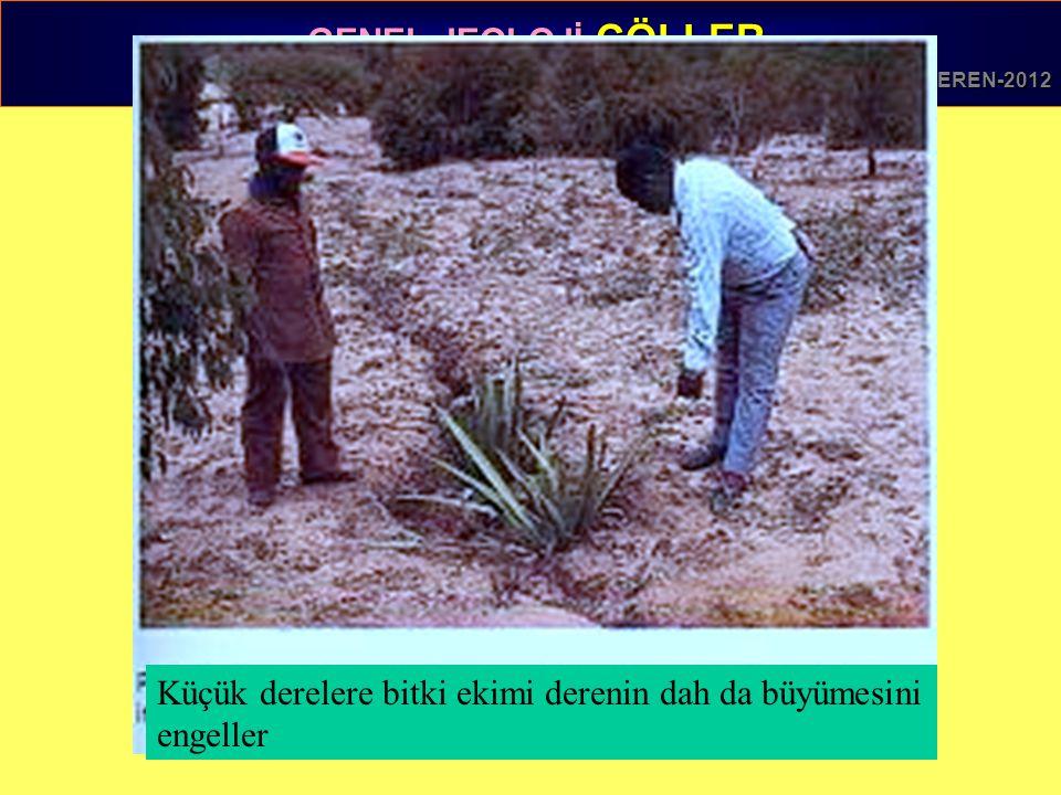 Küçük derelere bitki ekimi derenin dah da büyümesini