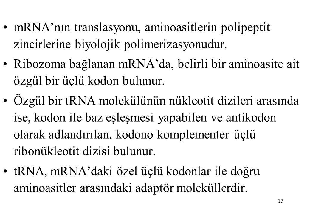 mRNA'nın translasyonu, aminoasitlerin polipeptit zincirlerine biyolojik polimerizasyonudur.