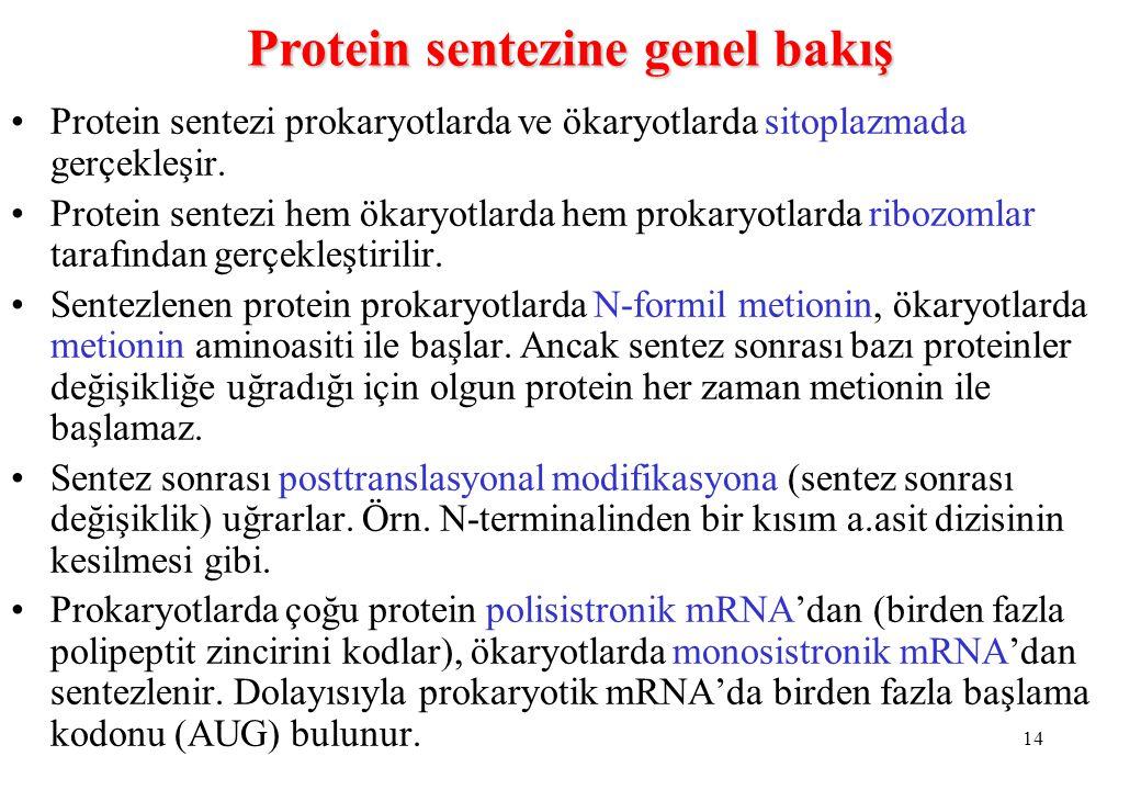 Protein sentezine genel bakış