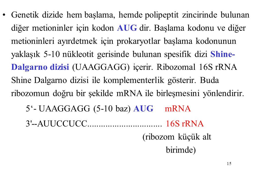 Genetik dizide hem başlama, hemde polipeptit zincirinde bulunan diğer metioninler için kodon AUG dir. Başlama kodonu ve diğer metioninleri ayırdetmek için prokaryotlar başlama kodonunun yaklaşık 5-10 nükleotit gerisinde bulunan spesifik dizi Shine-Dalgarno dizisi (UAAGGAGG) içerir. Ribozomal 16S rRNA Shine Dalgarno dizisi ile komplementerlik gösterir. Buda ribozomun doğru bir şekilde mRNA ile birleşmesini yönlendirir.
