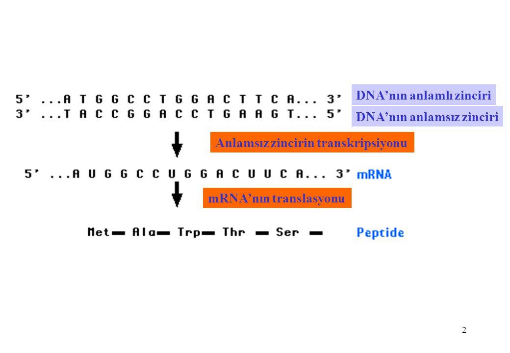 DNA'nın anlamlı zinciri