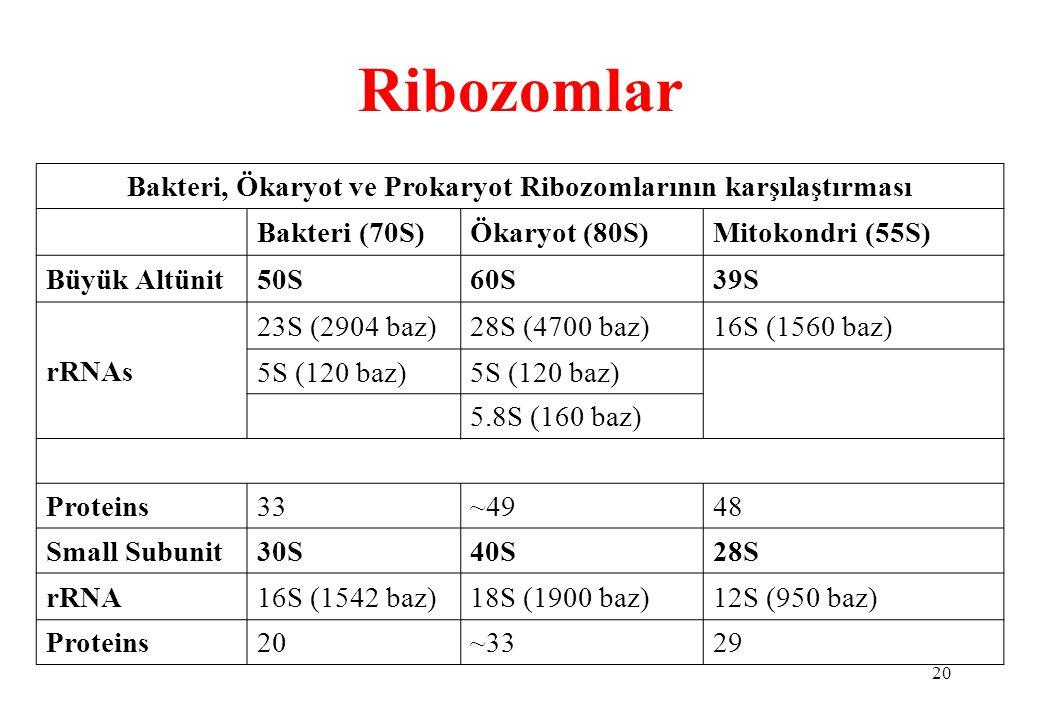 Bakteri, Ökaryot ve Prokaryot Ribozomlarının karşılaştırması