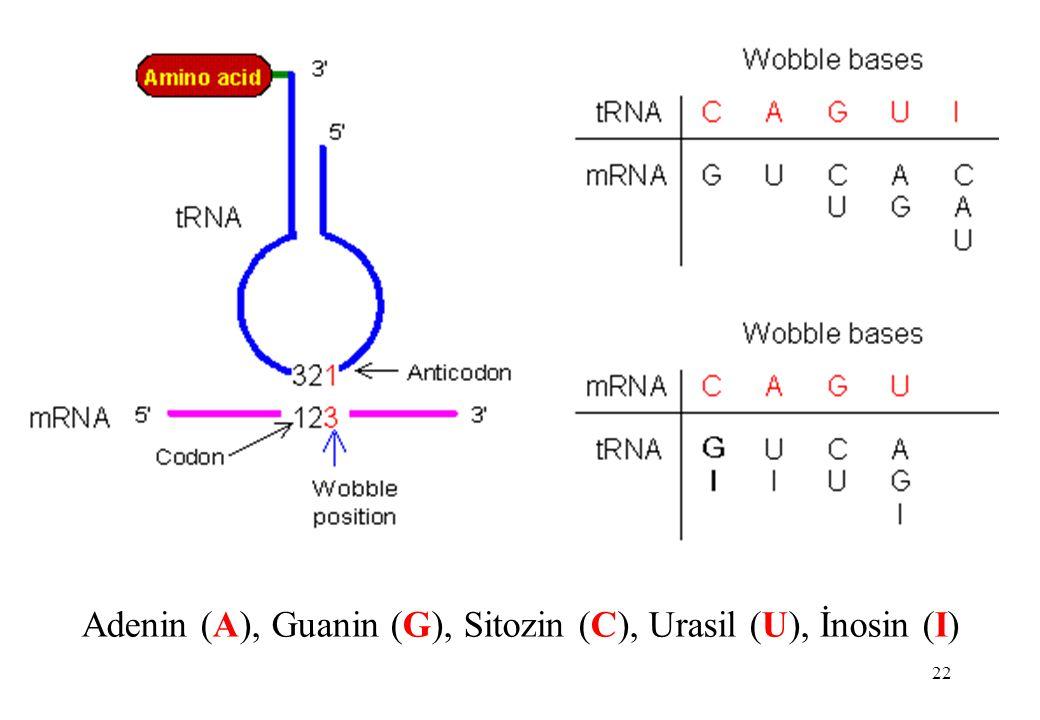 Adenin (A), Guanin (G), Sitozin (C), Urasil (U), İnosin (I)