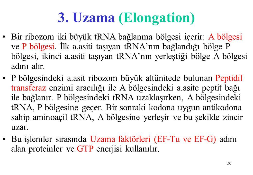 3. Uzama (Elongation)