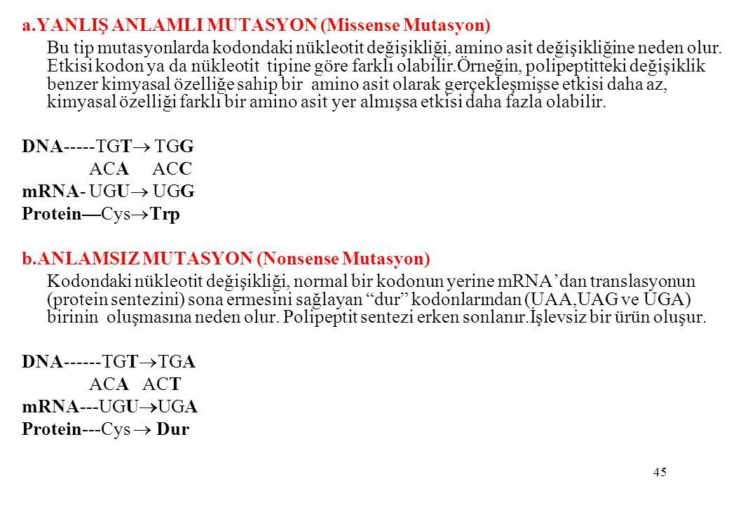 a.YANLIŞ ANLAMLI MUTASYON (Missense Mutasyon)