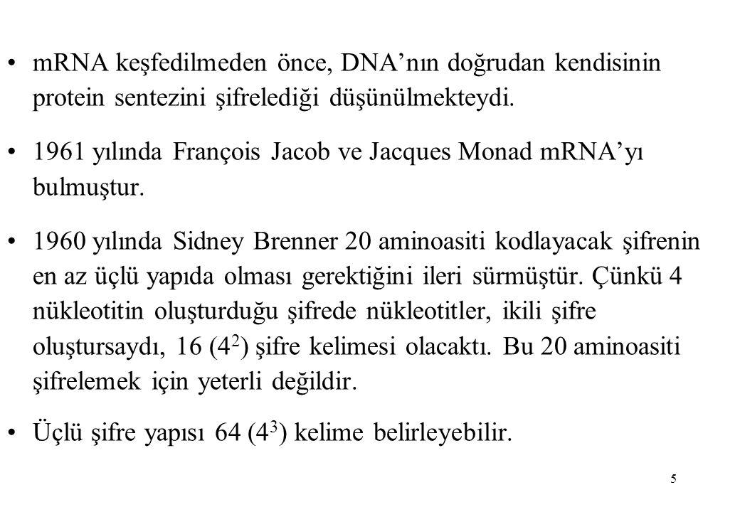 mRNA keşfedilmeden önce, DNA'nın doğrudan kendisinin protein sentezini şifrelediği düşünülmekteydi.