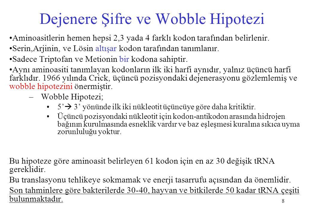 Dejenere Şifre ve Wobble Hipotezi