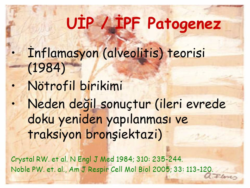 UİP / İPF Patogenez İnflamasyon (alveolitis) teorisi (1984)