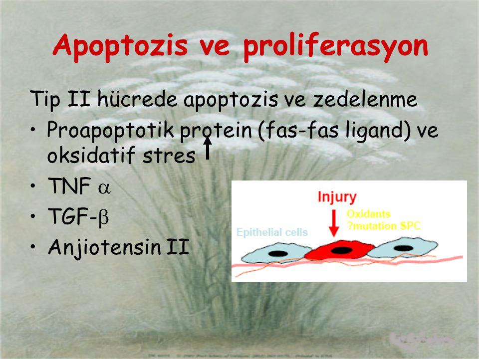 Apoptozis ve proliferasyon