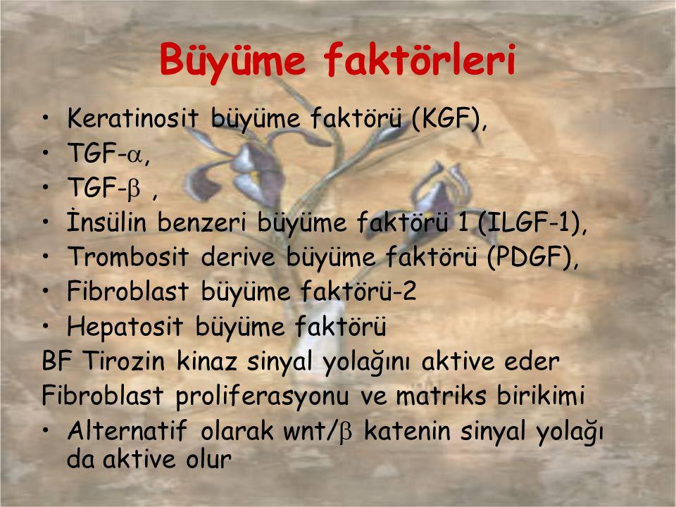 Büyüme faktörleri Keratinosit büyüme faktörü (KGF), TGF-, TGF- ,