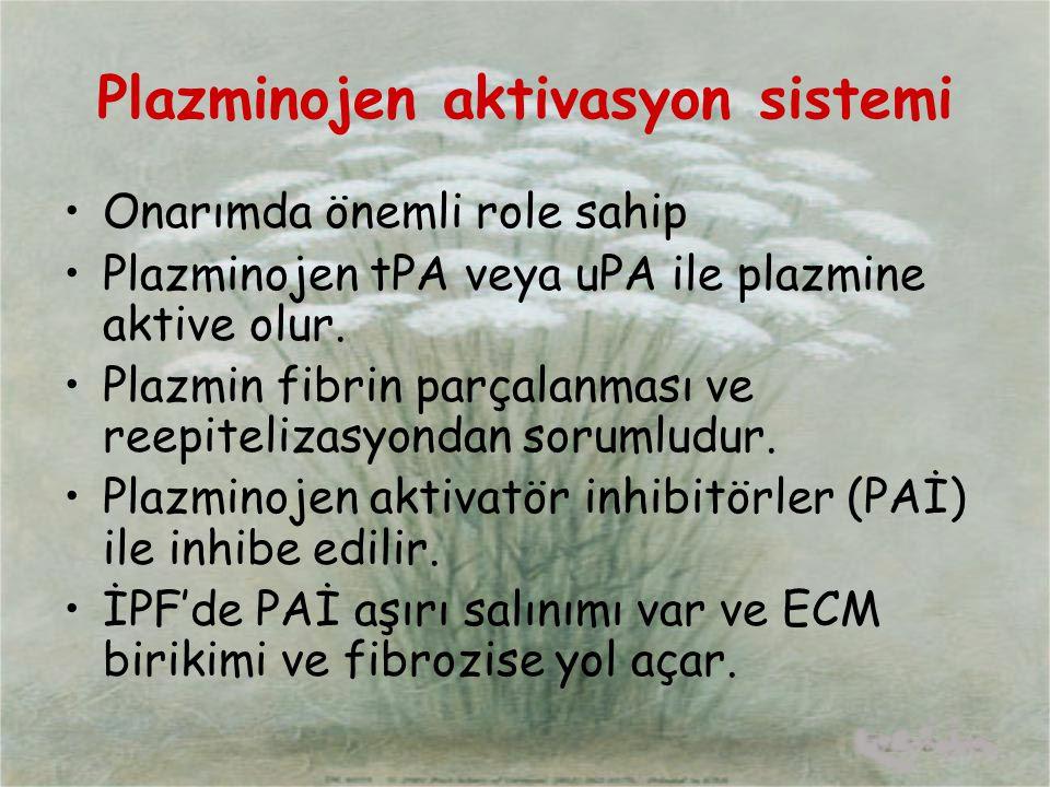 Plazminojen aktivasyon sistemi