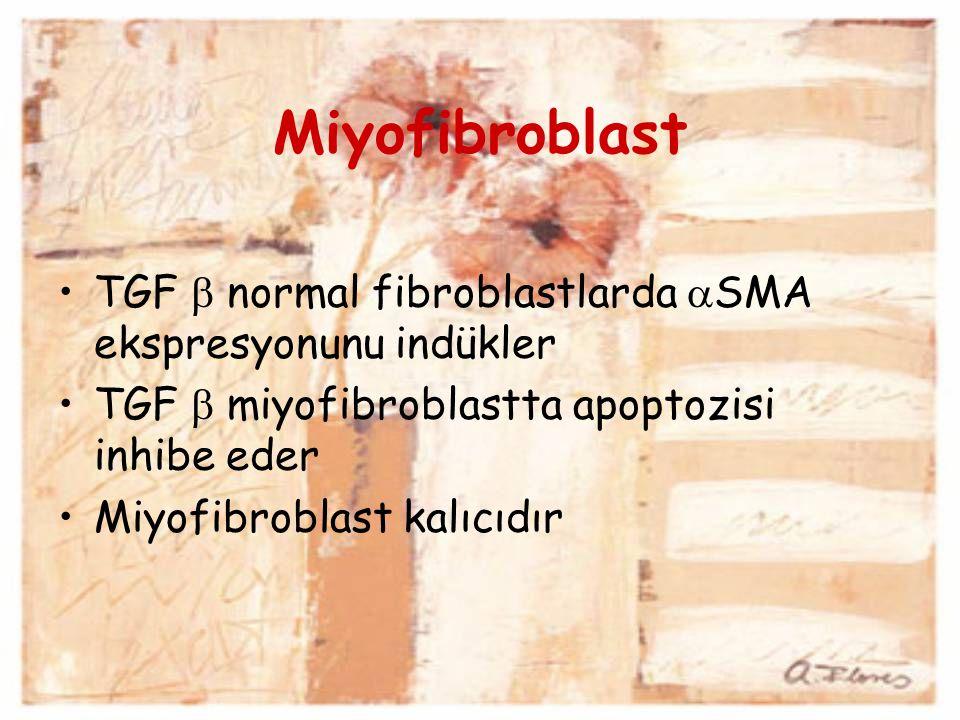 Miyofibroblast TGF  normal fibroblastlarda SMA ekspresyonunu indükler. TGF  miyofibroblastta apoptozisi inhibe eder.