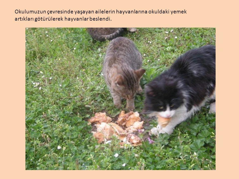 Okulumuzun çevresinde yaşayan ailelerin hayvanlarına okuldaki yemek artıkları götürülerek hayvanlar beslendi.