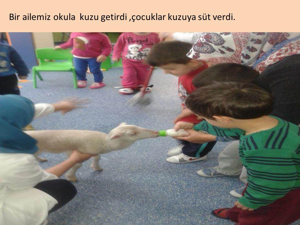 Bir ailemiz okula kuzu getirdi ,çocuklar kuzuya süt verdi.