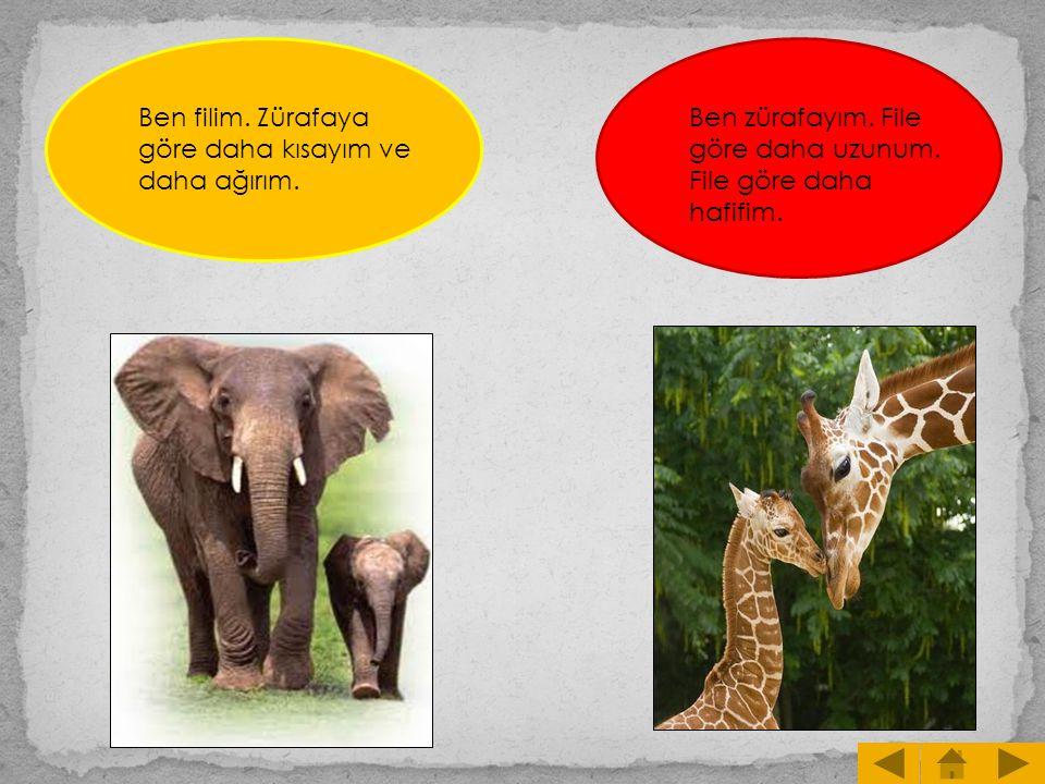Ben filim. Zürafaya göre daha kısayım ve daha ağırım.