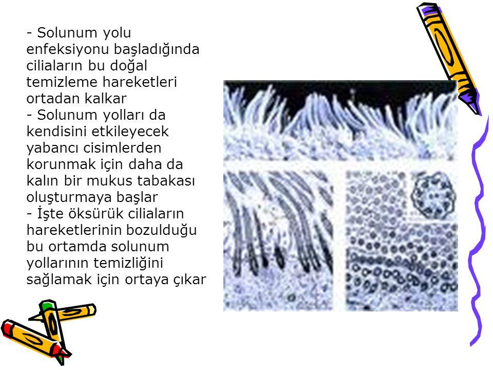 - Solunum yolu enfeksiyonu başladığında ciliaların bu doğal temizleme hareketleri ortadan kalkar