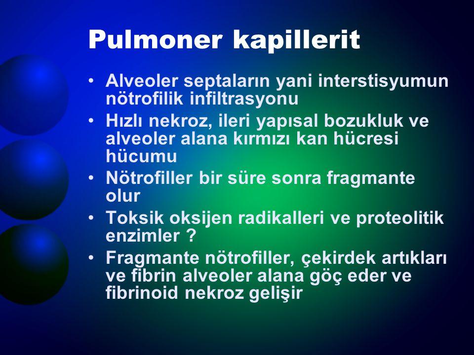 Pulmoner kapillerit Alveoler septaların yani interstisyumun nötrofilik infiltrasyonu.