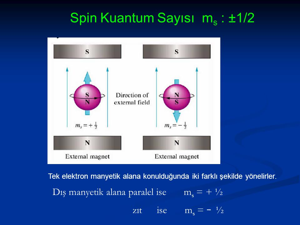 Spin Kuantum Sayısı ms : ±1/2