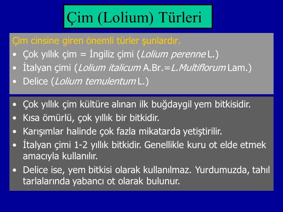 Çim (Lolium) Türleri Çim cinsine giren önemli türler şunlardır.