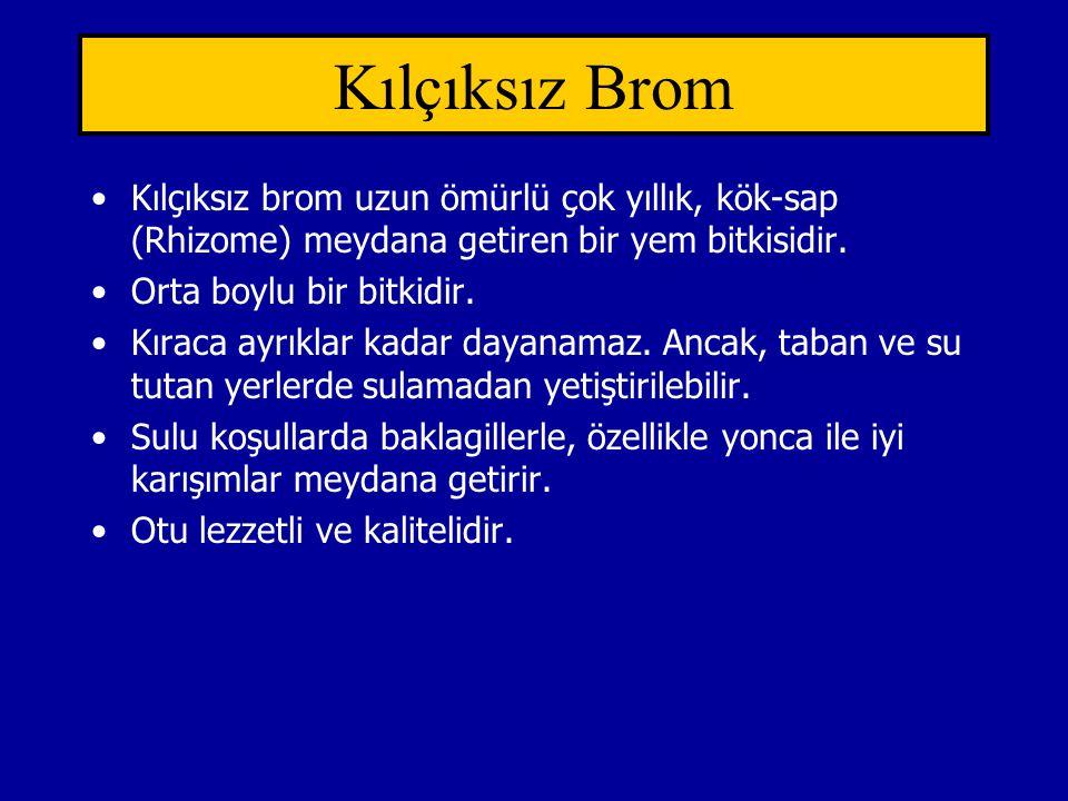Kılçıksız Brom Kılçıksız brom uzun ömürlü çok yıllık, kök-sap (Rhizome) meydana getiren bir yem bitkisidir.