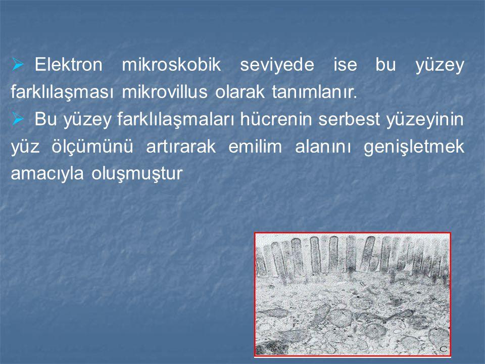 Elektron mikroskobik seviyede ise bu yüzey farklılaşması mikrovillus olarak tanımlanır.