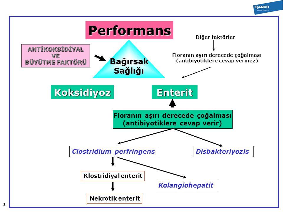 Performans Koksidiyoz Enterit Bağırsak Sağlığı