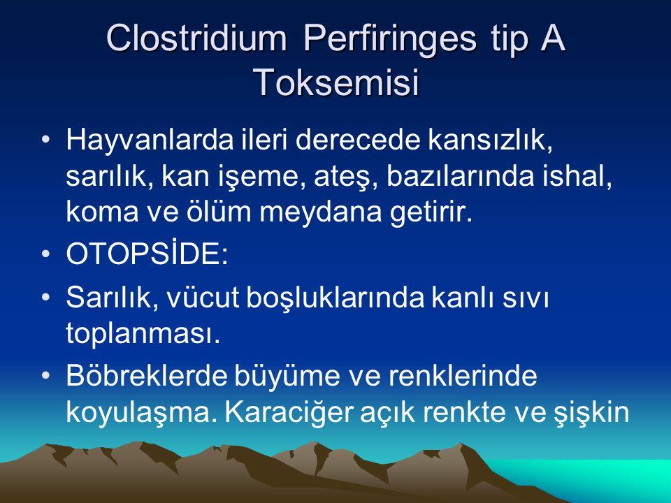 Clostridium Perfiringes tip A Toksemisi