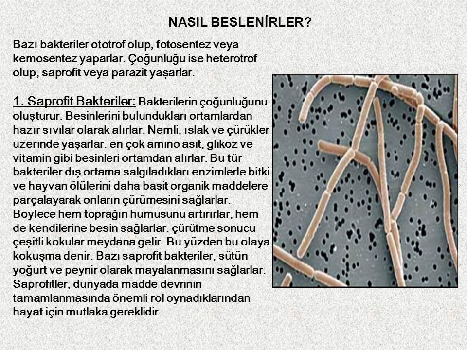 NASIL BESLENİRLER