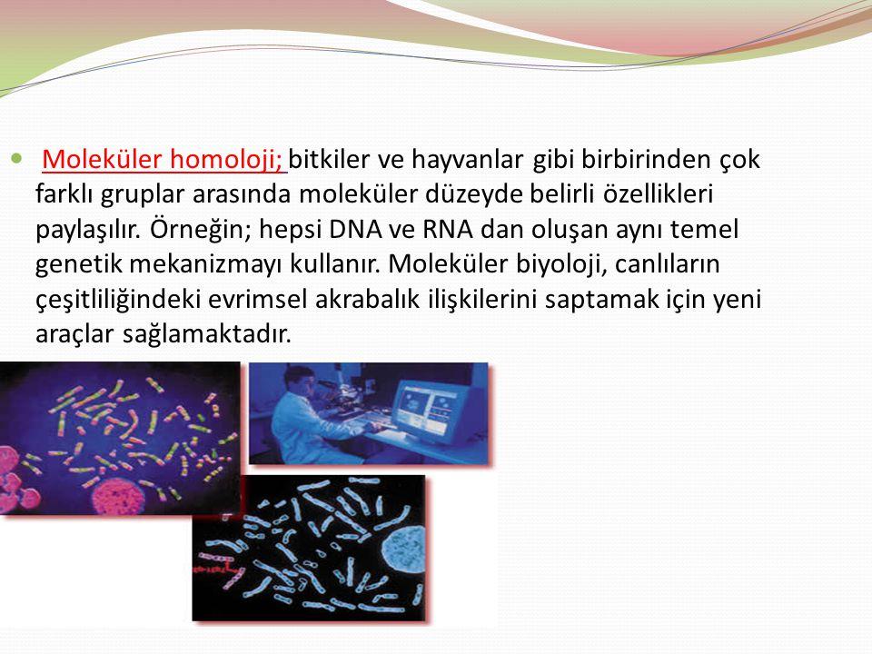 Moleküler homoloji; bitkiler ve hayvanlar gibi birbirinden çok farklı gruplar arasında moleküler düzeyde belirli özellikleri paylaşılır.