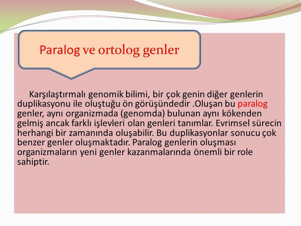 Paralog ve ortolog genler
