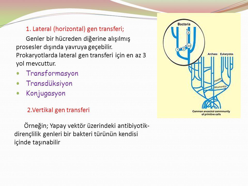1. Lateral (horizontal) gen transferi;
