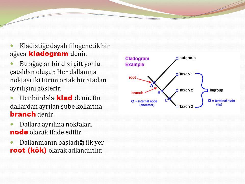 Kladistiğe dayalı filogenetik bir ağaca kladogram denir.