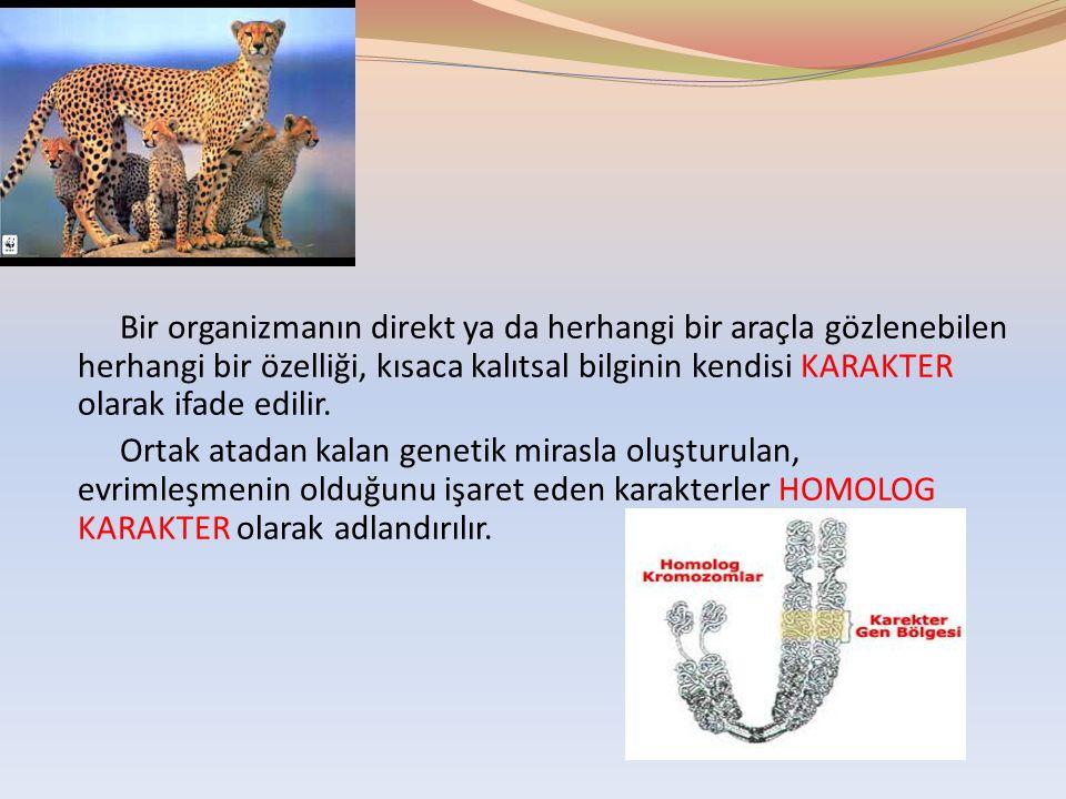 Bir organizmanın direkt ya da herhangi bir araçla gözlenebilen herhangi bir özelliği, kısaca kalıtsal bilginin kendisi KARAKTER olarak ifade edilir.