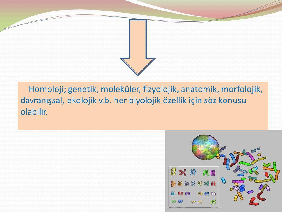 Homoloji; genetik, moleküler, fizyolojik, anatomik, morfolojik, davranışsal, ekolojik v.b.