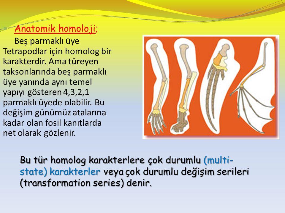 Anatomik homoloji;