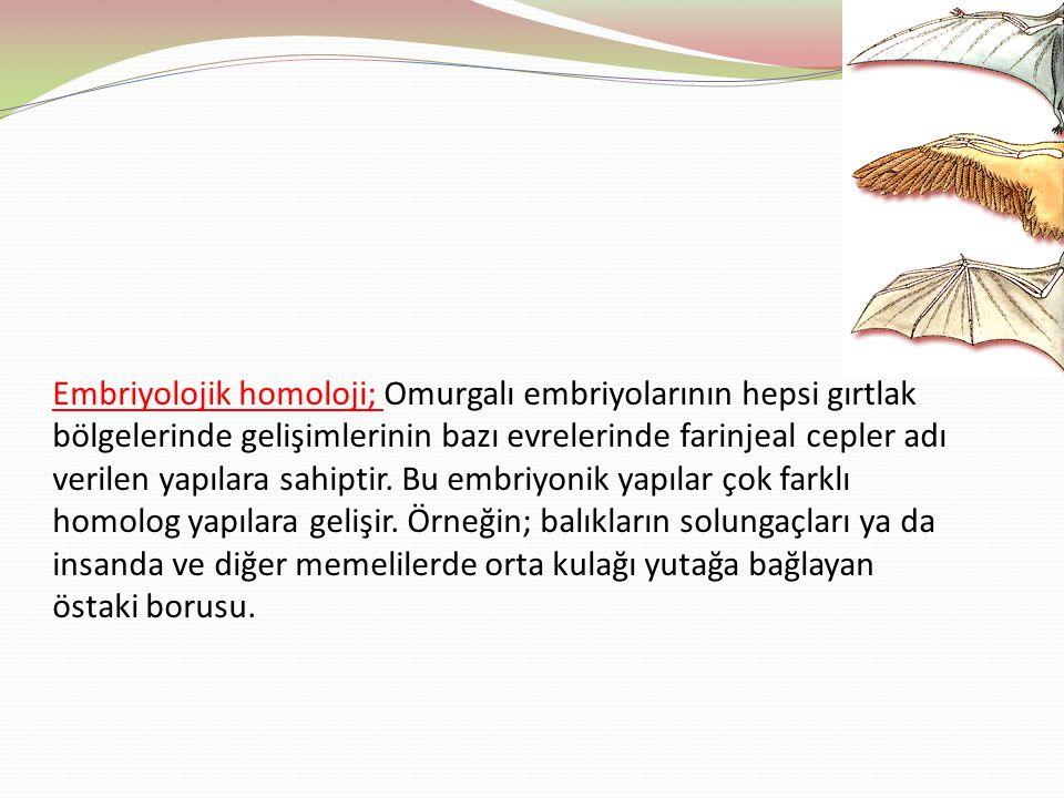 Embriyolojik homoloji; Omurgalı embriyolarının hepsi gırtlak bölgelerinde gelişimlerinin bazı evrelerinde farinjeal cepler adı verilen yapılara sahiptir.