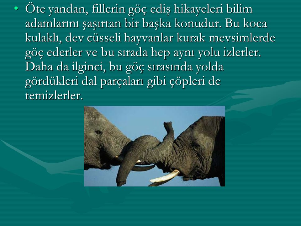 Öte yandan, fillerin göç ediş hikayeleri bilim adamlarını şaşırtan bir başka konudur.