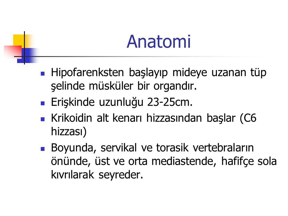 Anatomi Hipofarenksten başlayıp mideye uzanan tüp şelinde müsküler bir organdır. Erişkinde uzunluğu 23-25cm.