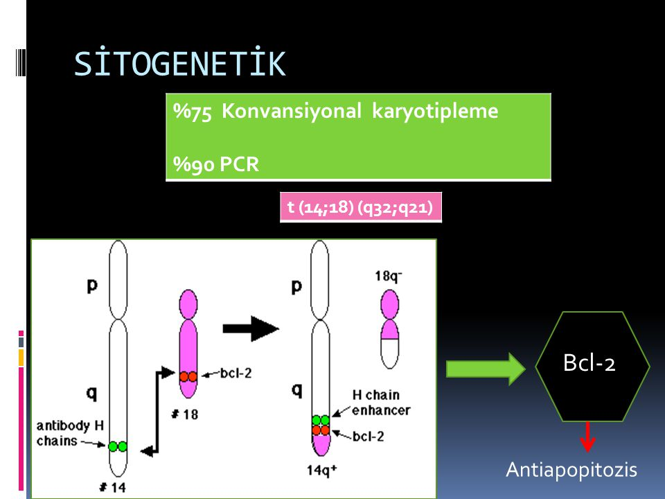SİTOGENETİK Bcl-2 %75 Konvansiyonal karyotipleme %90 PCR