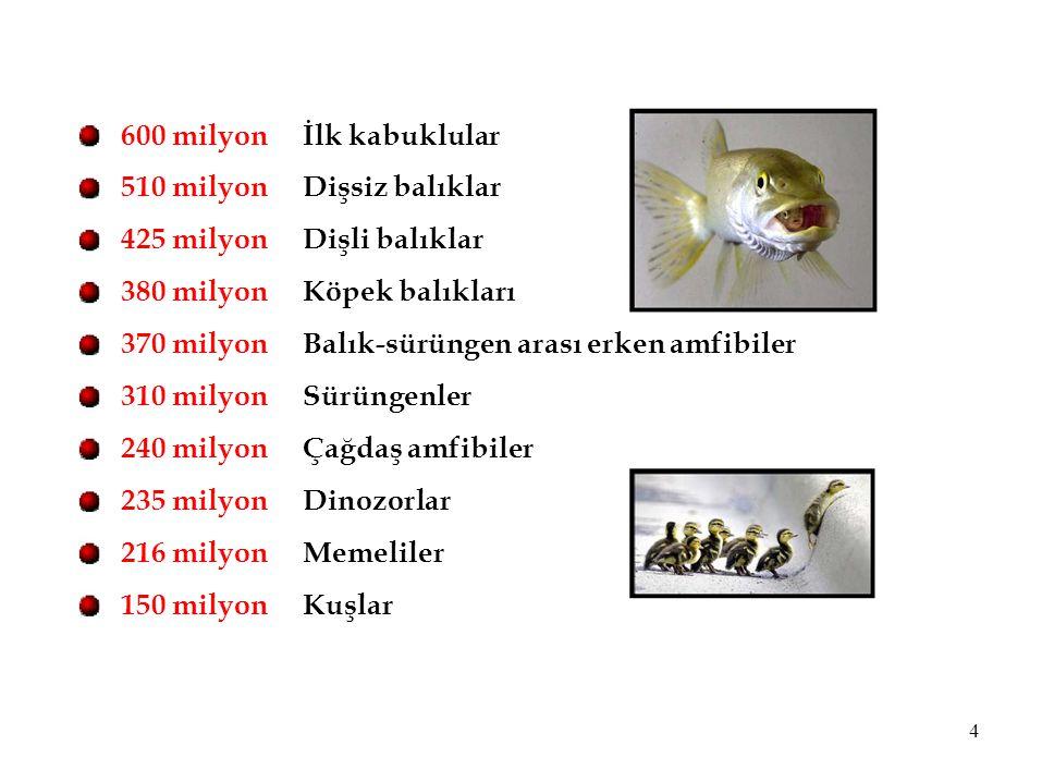Balık-sürüngen arası erken amfibiler Sürüngenler Çağdaş amfibiler