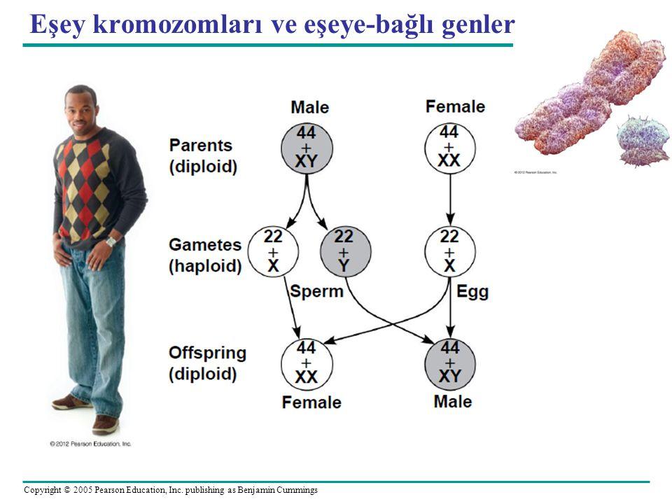 Eşey kromozomları ve eşeye-bağlı genler