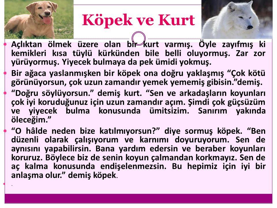 Köpek ve Kurt