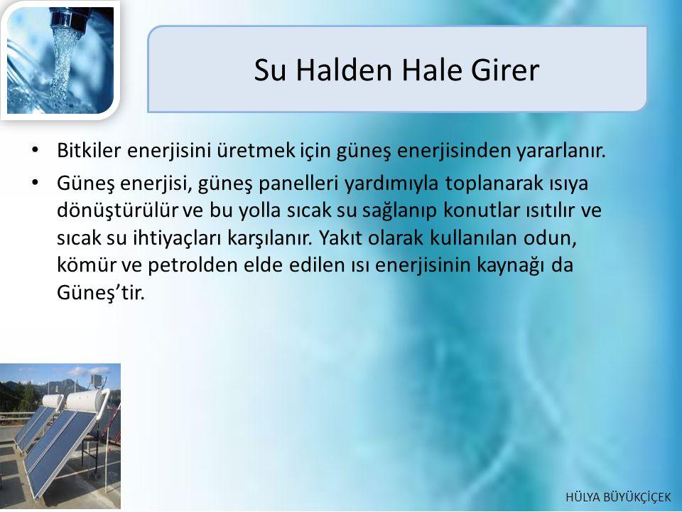 Su Halden Hale Girer Bitkiler enerjisini üretmek için güneş enerjisinden yararlanır.